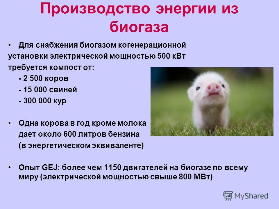 Производство энергии из биогаза Для снабжения биогазом когенерационной установки электрической мощностью 500 кВт требуется компост от: - 2 500 коров - 15 000 свиней - 300 000 кур Одна корова в год кроме молока дает около 600 литров бензина (в энергет