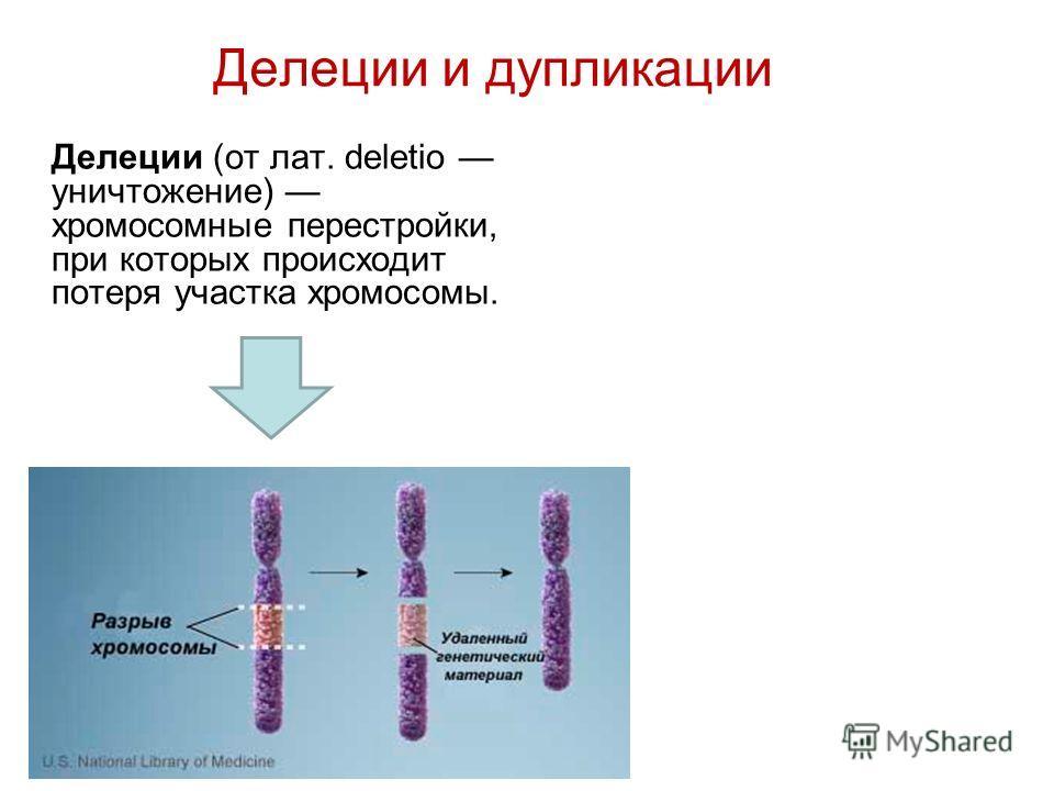 Делеции и дупликации Делеции (от лат. deletio уничтожение) хромосомные перестройки, при которых происходит потеря участка хромосомы.