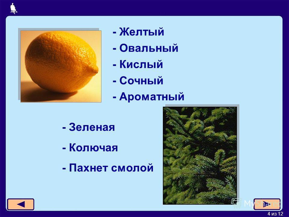 4 из 12 - Желтый - Овальный - Кислый - Сочный - Ароматный - Зеленая - Колючая - Пахнет смолой