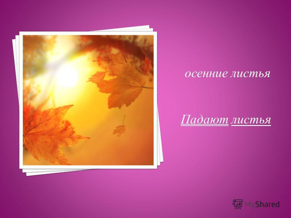 осенние листья Падают листья