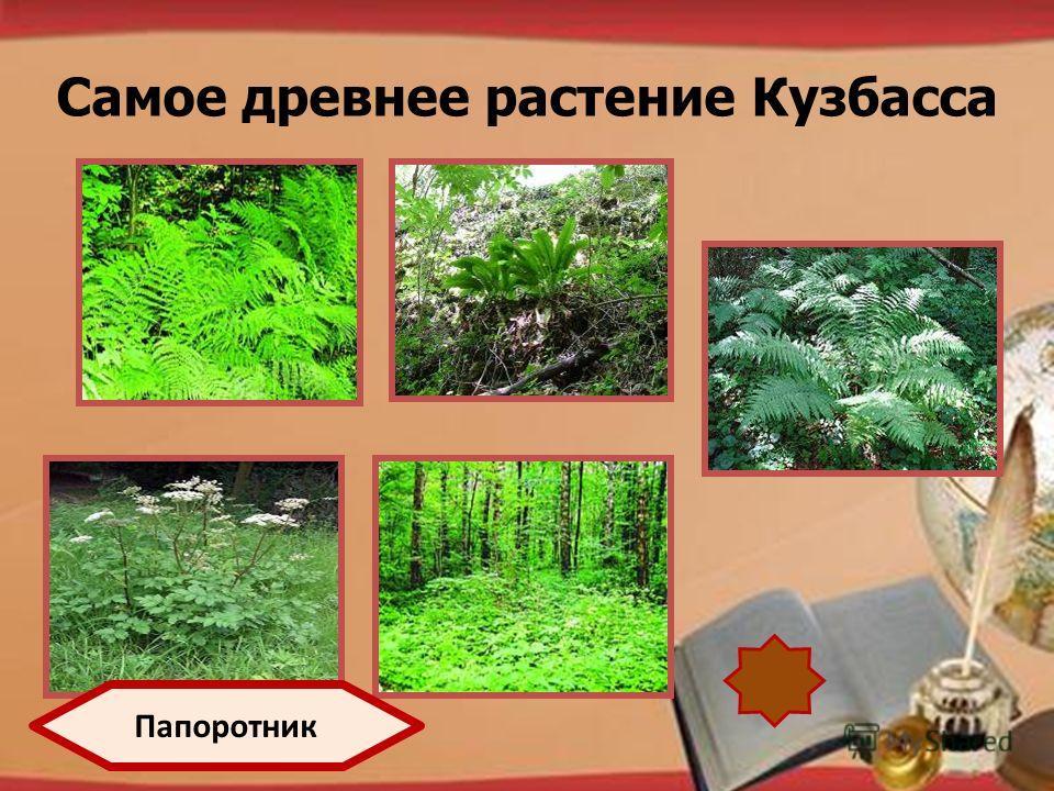 http://pedsovet.su/load/321 Самое древнее растение Кузбасса Папоротник