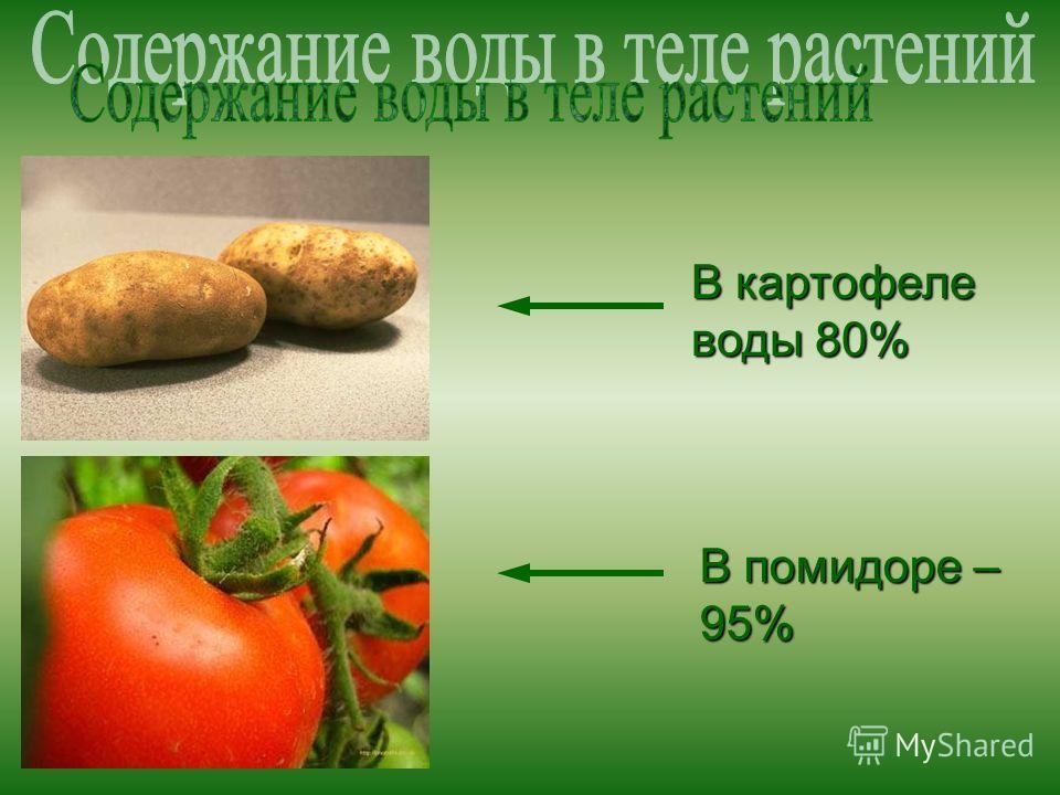В картофеле воды 80% В помидоре – 95%