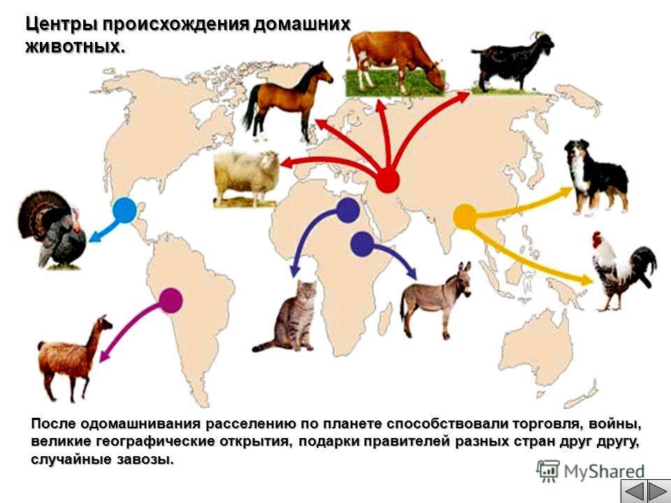 Центры происхождения домашних животных. После одомашнивания расселению по планете способствовали торговля, войны, великие географические открытия, подарки правителей разных стран друг другу, случайные завозы.