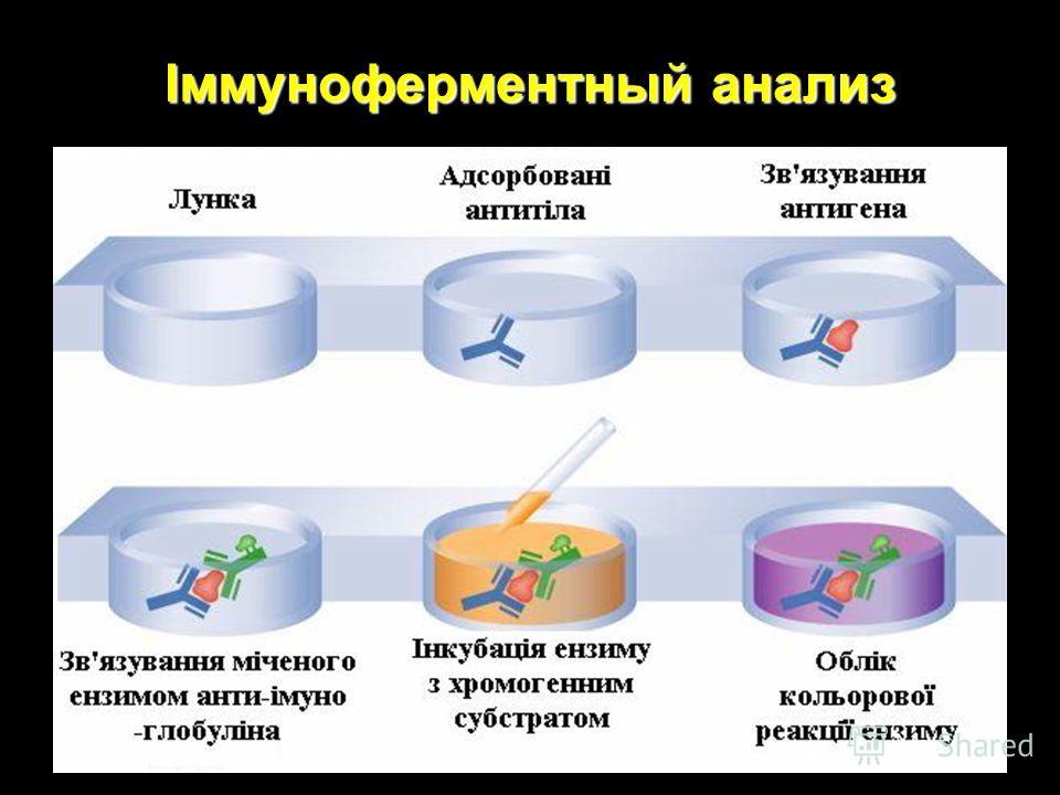 Іммуноферментный анализ