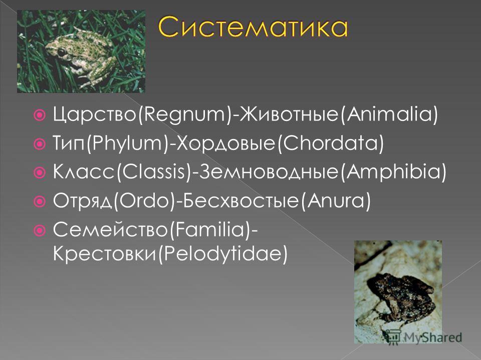 Царство(Regnum)-Животные(Animalia) Тип(Phylum)-Хордовые(Chordata) Класс(Classis)-Земноводные(Amphibia) Отряд(Ordo)-Бесхвостые(Anura) Семейство(Familia)- Крестовки(Pelodytidae)