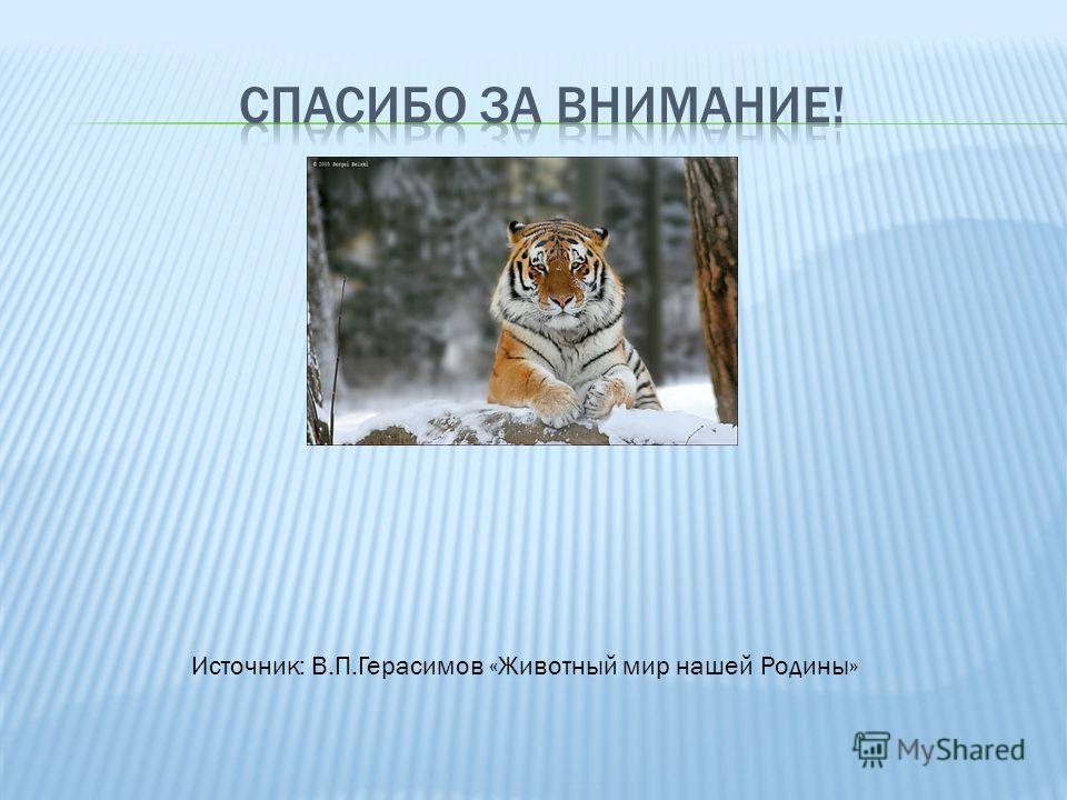 Источник: В.П.Герасимов «Животный мир нашей Родины»