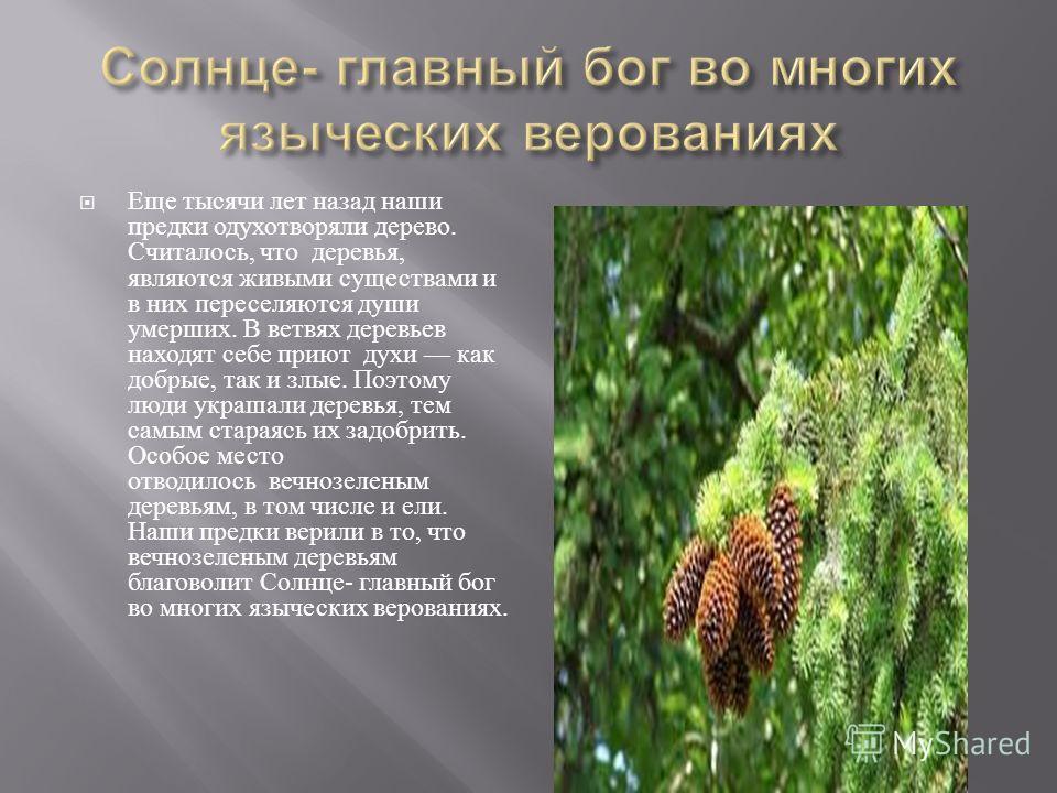 Еще тысячи лет назад наши предки одухотворяли дерево. Считалось, что деревья, являются живыми существами и в них переселяются души умерших. В ветвях деревьев находят себе приют духи как добрые, так и злые. Поэтому люди украшали деревья, тем самым ста