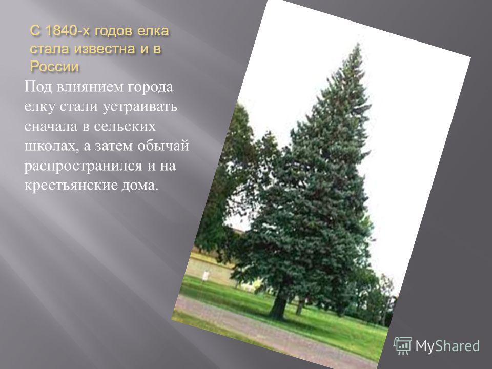 С 1840- х годов елка стала известна и в России Под влиянием города елку стали устраивать сначала в сельских школах, а затем обычай распространился и на крестьянские дома.