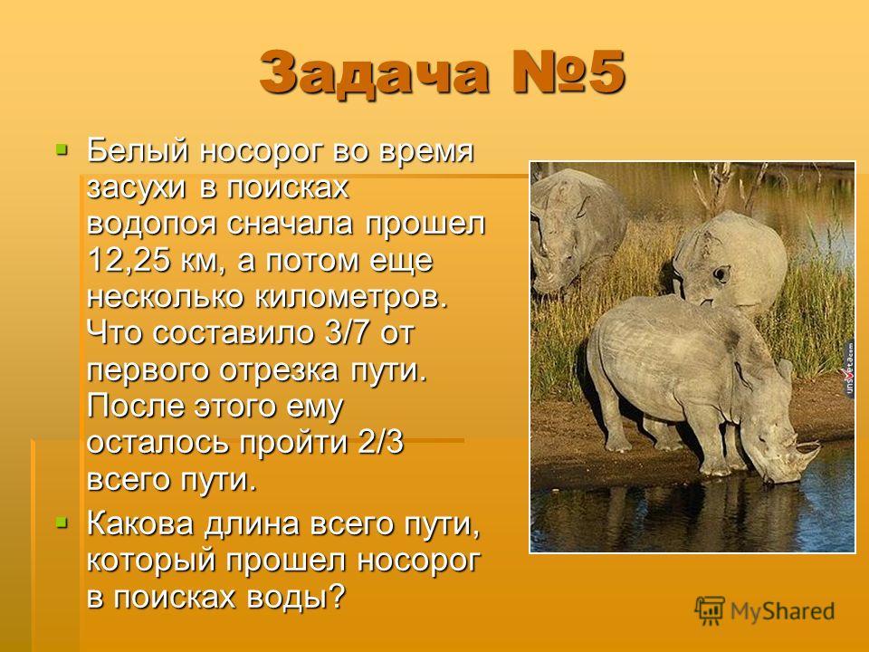 Задача 5 Белый носорог во время засухи в поисках водопоя сначала прошел 12,25 км, а потом еще несколько километров. Что составило 3/7 от первого отрезка пути. После этого ему осталось пройти 2/3 всего пути. Белый носорог во время засухи в поисках вод