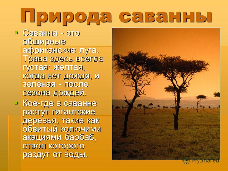 Природа саванны Саванна - это обширные африканские луга. Трава здесь всегда густая: желтая, когда нет дождя, и зеленая - после сезона дождей. Саванна - это обширные африканские луга. Трава здесь всегда густая: желтая, когда нет дождя, и зеленая - пос