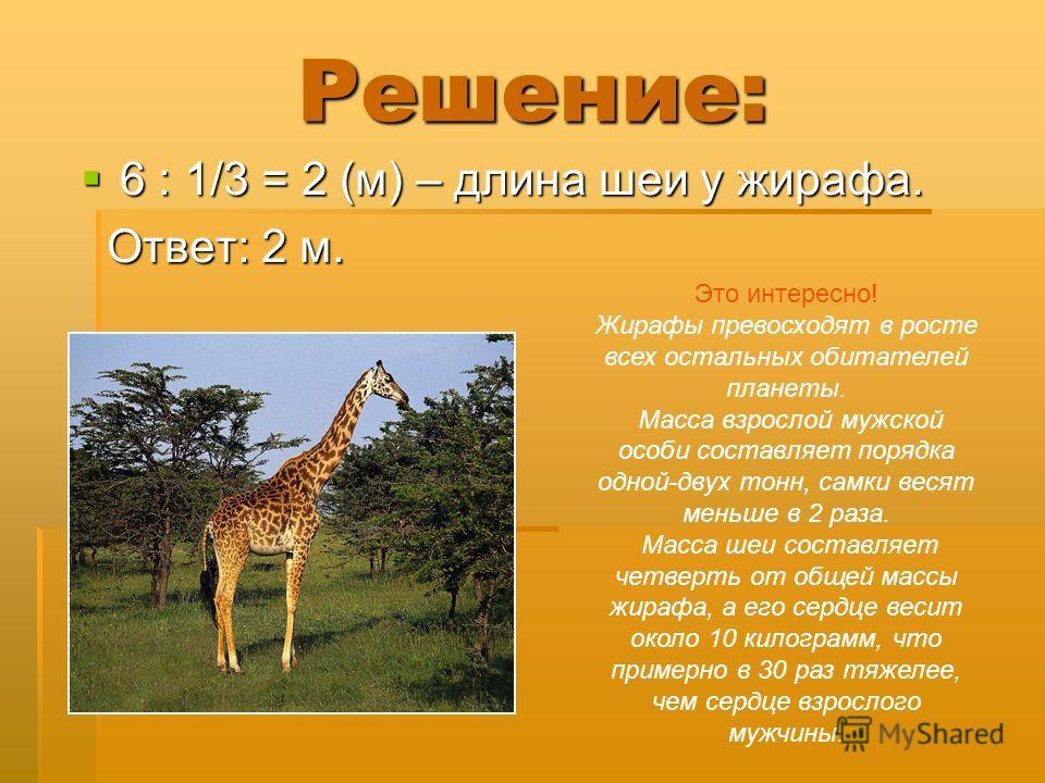 Решение: 6 : 1/3 = 2 (м) – длина шеи у жирафа. 6 : 1/3 = 2 (м) – длина шеи у жирафа. Ответ: 2 м. Ответ: 2 м. Это интересно! Жирафы превосходят в росте всех остальных обитателей планеты. Масса взрослой мужской особи составляет порядка одной-двух тонн,