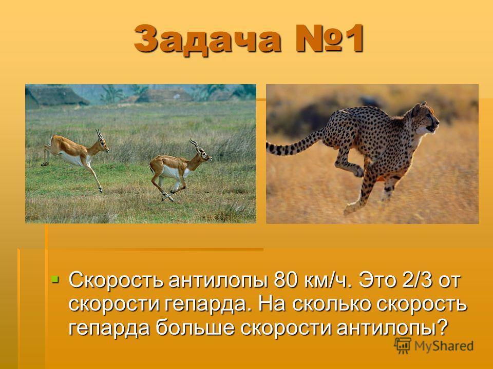 Задача 1 Скорость антилопы 80 км/ч. Это 2/3 от скорости гепарда. На сколько скорость гепарда больше скорости антилопы? Скорость антилопы 80 км/ч. Это 2/3 от скорости гепарда. На сколько скорость гепарда больше скорости антилопы?
