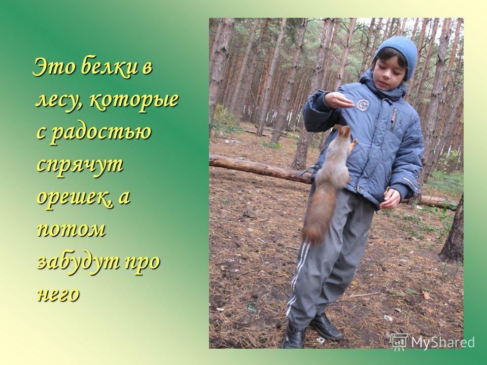 Это белки в лесу, которые с радостью спрячут орешек, а потом забудут про него Это белки в лесу, которые с радостью спрячут орешек, а потом забудут про него