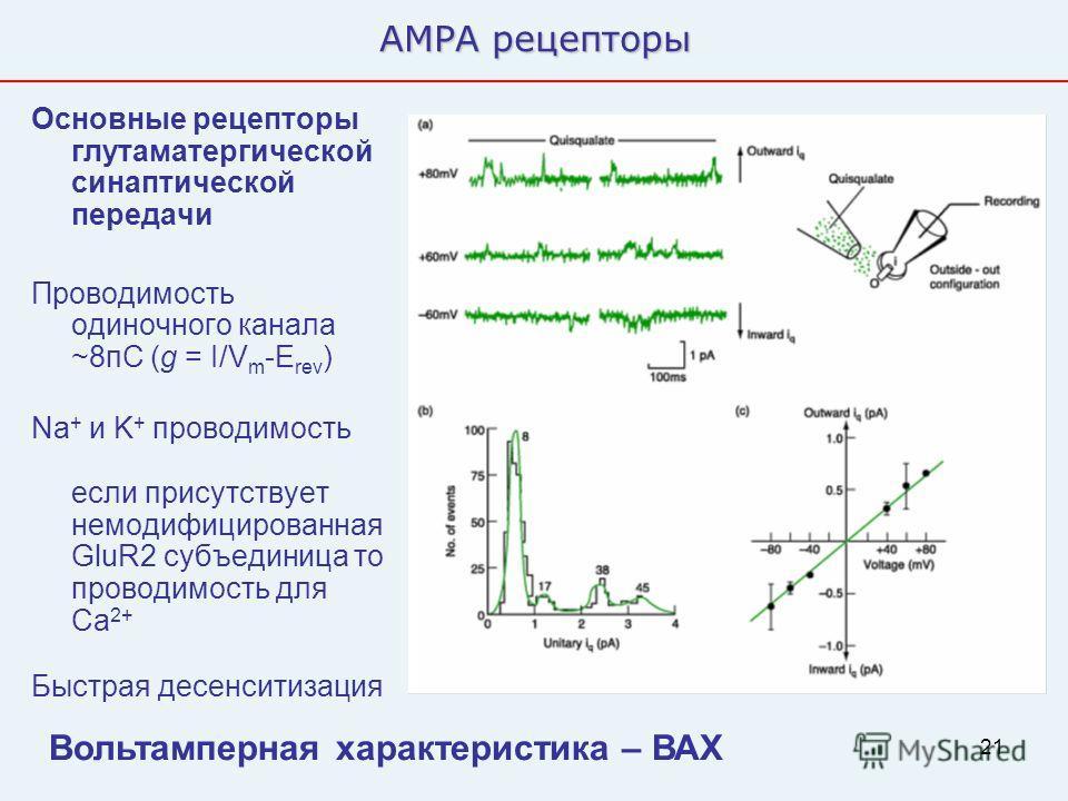 21 AMPA рецепторы Основные рецепторы глутаматергической синаптической передачи Проводимость одиночного канала ~8пС (g = I/V m -E rev ) Na + и K + проводимость если присутствует немодифицированная GluR2 субъединица то проводимость для Ca 2+ Быстрая де