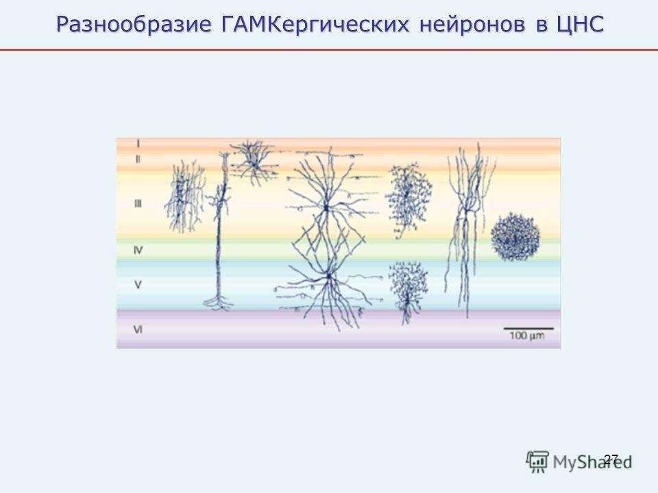 27 Разнообразие ГАМКергических нейронов в ЦНС