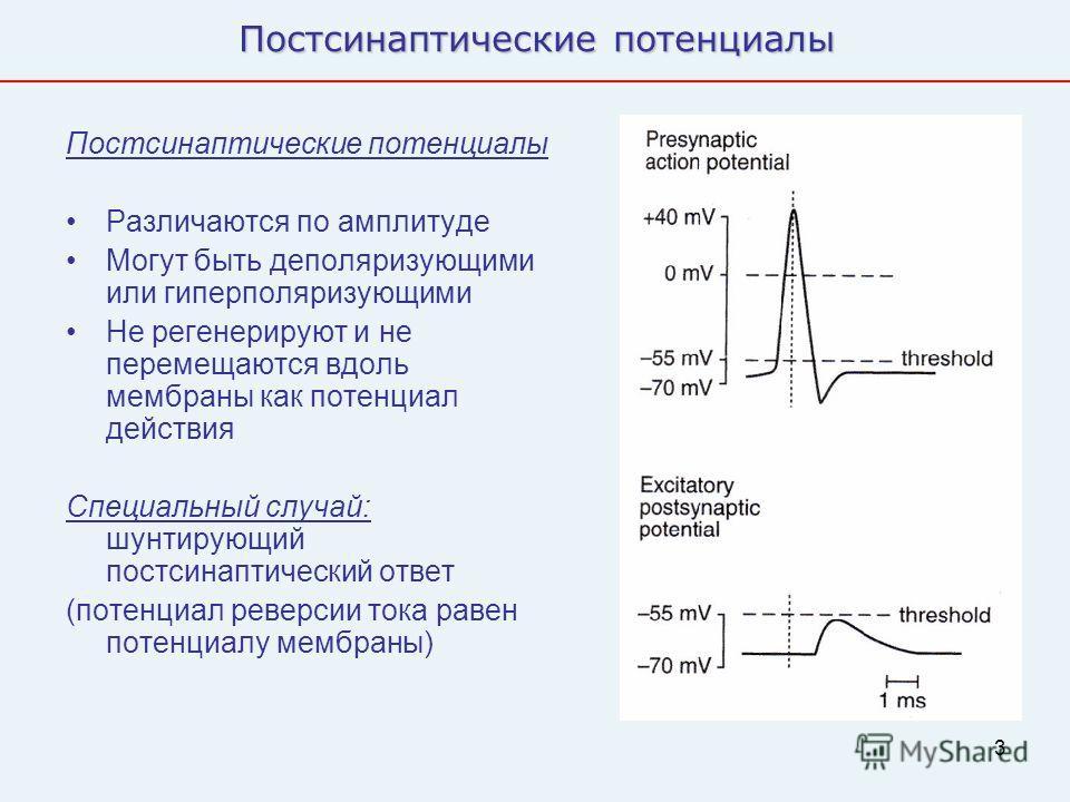 3 Постсинаптические потенциалы Различаются по амплитуде Могут быть деполяризующими или гиперполяризующими Не регенерируют и не перемещаются вдоль мембраны как потенциал действия Специальный случай: шунтирующий постсинаптический ответ (потенциал ревер