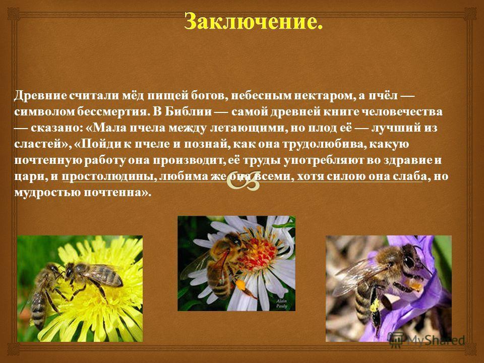 Древние считали мёд пищей богов, небесным нектаром, а пчёл символом бессмертия. В Библии самой древней книге человечества сказано : « Мала пчела между летающими, но плод её лучший из сластей », « Пойди к пчеле и познай, как она трудолюбива, какую поч