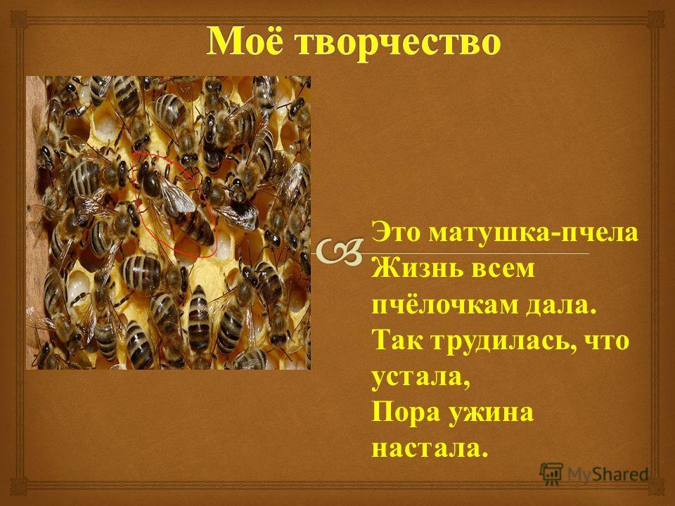 Это матушка - пчела Жизнь всем пчёлочкам дала. Так трудилась, что устала, Пора ужина настала.