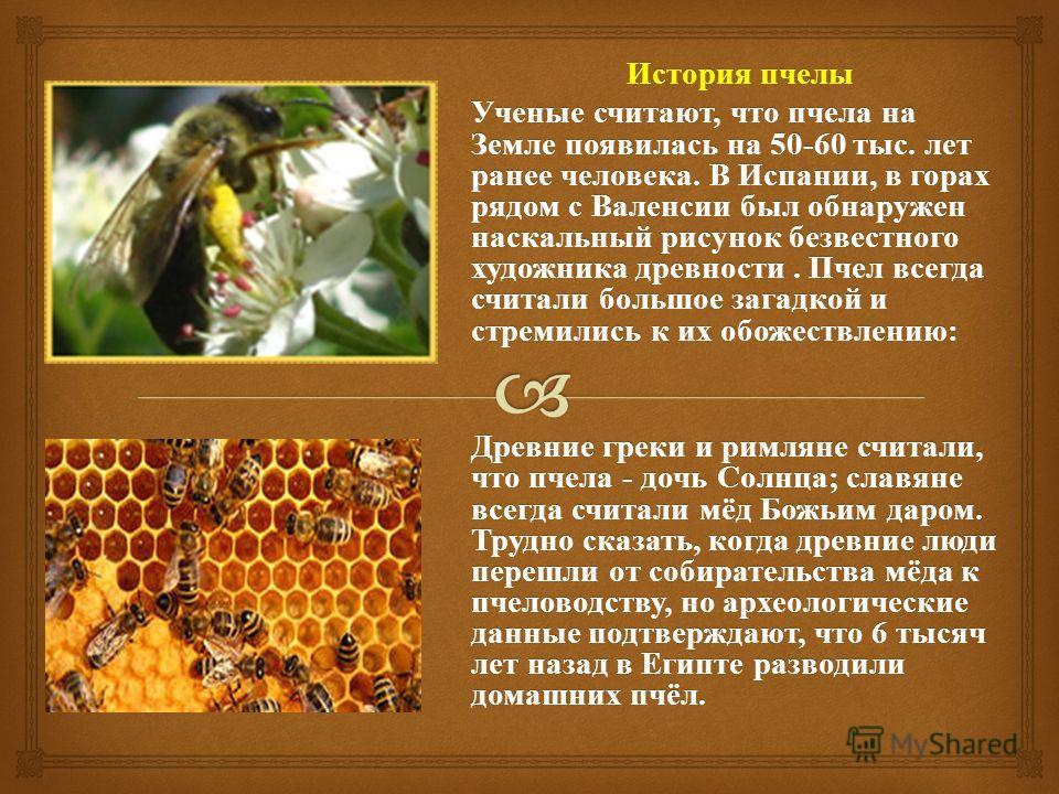История пчелы Ученые считают, что пчела на Земле появилась на 50-60 тыс. лет ранее человека. В Испании, в горах рядом с Валенсии был обнаружен наскальный рисунок безвестного художника древности. Пчел всегда считали большое загадкой и стремились к их
