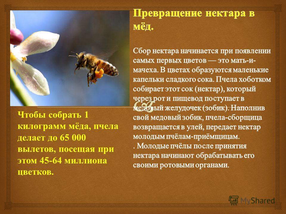 Чтобы собрать 1 килограмм мёда, пчела делает до 65 000 вылетов, посещая при этом 45-64 миллиона цветков.