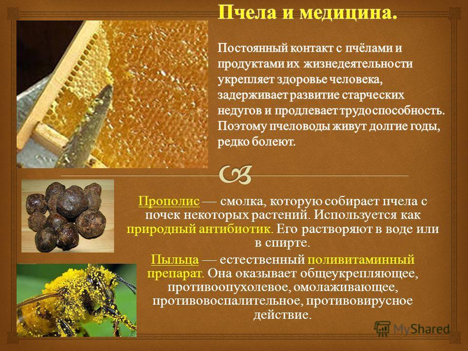 Прополис смолка, которую собирает пчела с почек некоторых растений. Используется как природный антибиотик. Его растворяют в воде или в спирте. Пыльца естественный поливитаминный препарат. Она оказывает общеукрепляющее, противоопухолевое, омолаживающе