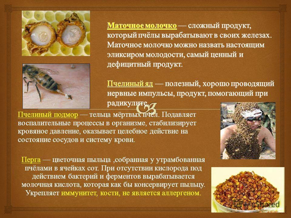 Пчелиный подмор тельца мёртвых пчёл. Подавляет воспалительные процессы в организме, стабилизирует кровяное давление, оказывает целебное действие на состояние сосудов и систему крови. Перга цветочная пыльца, собранная у утрамбованная пчёлами в ячейках