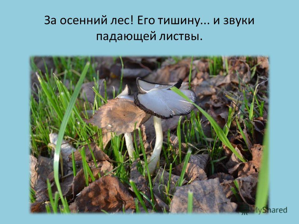 За осенний лес! Его тишину... и звуки падающей листвы.