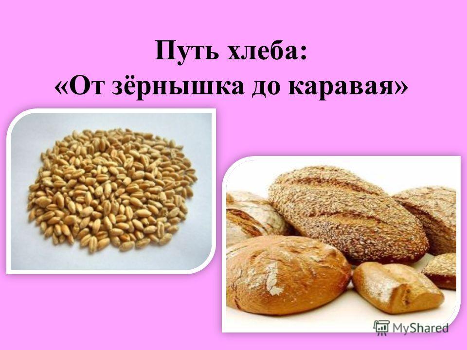 Путь хлеба: «От зёрнышка до каравая»