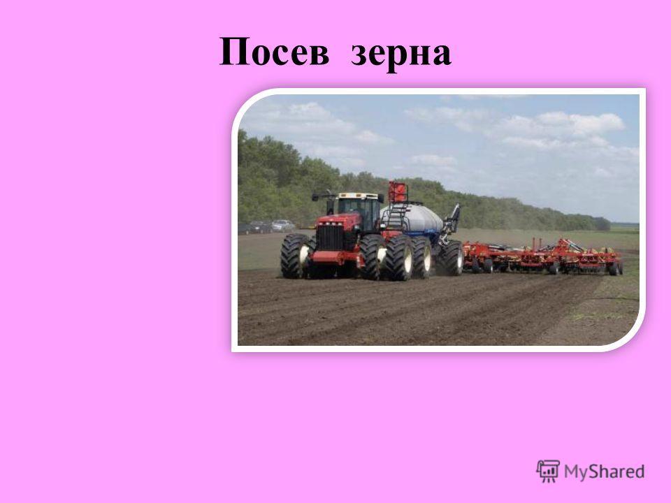 Посев зерна