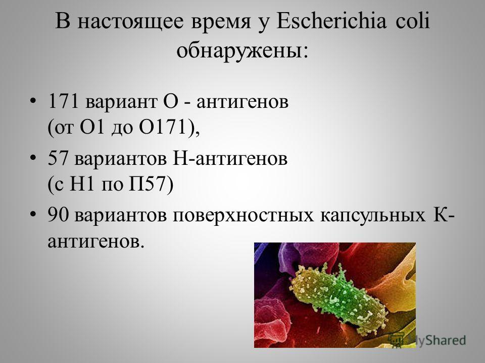В настоящее время у Escherichia coli обнаружены: 171 вариант О - антигенов (от О1 до О171), 57 вариантов Н-антигенов (с Н1 по П57) 90 вариантов поверхностных капсульных К- антигенов.