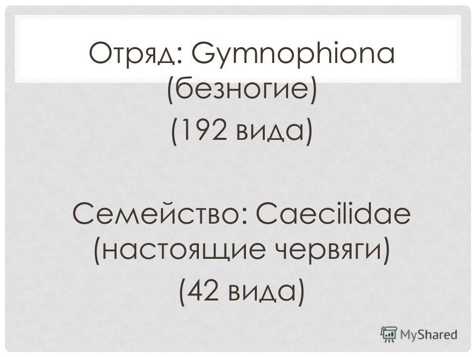 Отряд: Gymnophiona (безногие) (192 вида) Семейство: Caecilidae (настоящие червяги) (42 вида)