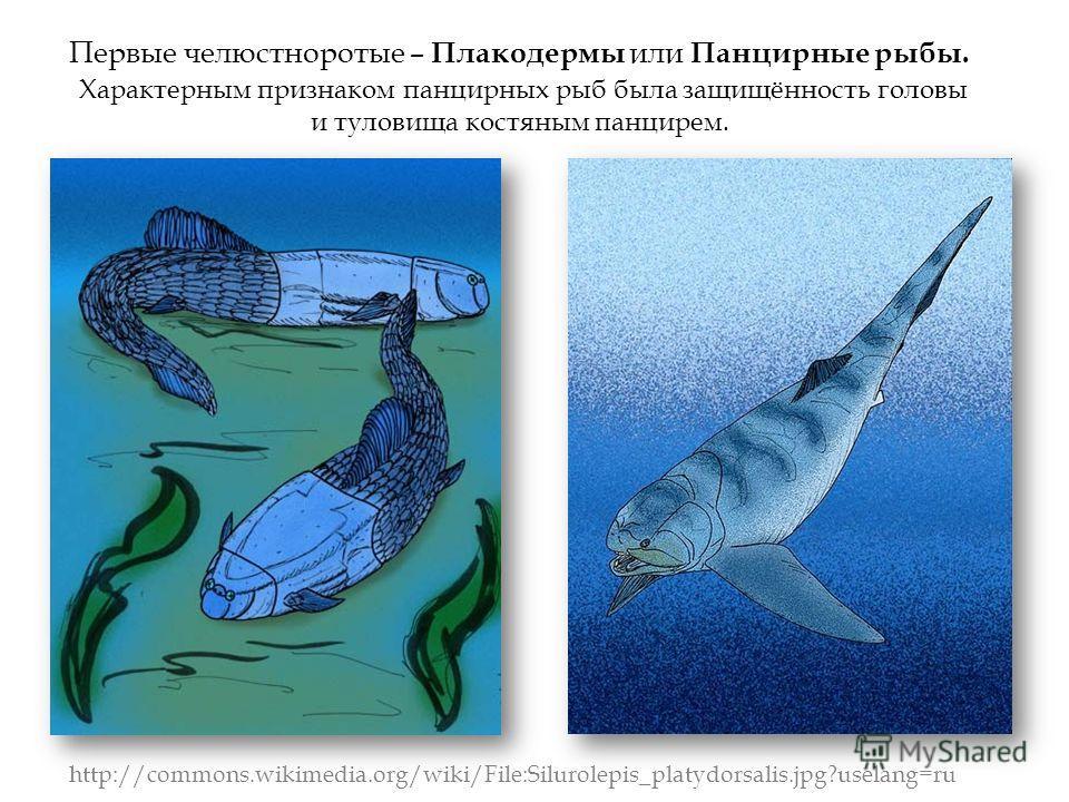 Первые челюстноротые – Плакодермы или Панцирные рыбы. Характерным признаком панцирных рыб была защищённость головы и туловища костяным панцирем. http://commons.wikimedia.org/wiki/File:Silurolepis_platydorsalis.jpg?uselang=ru