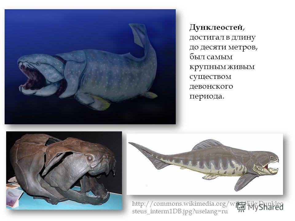 Дунклеостей, достигал в длину до десяти метров, был самым крупным живым существом девонского периода. http://commons.wikimedia.org/wiki/File:Dunkleo steus_interm1DB.jpg?uselang=ru