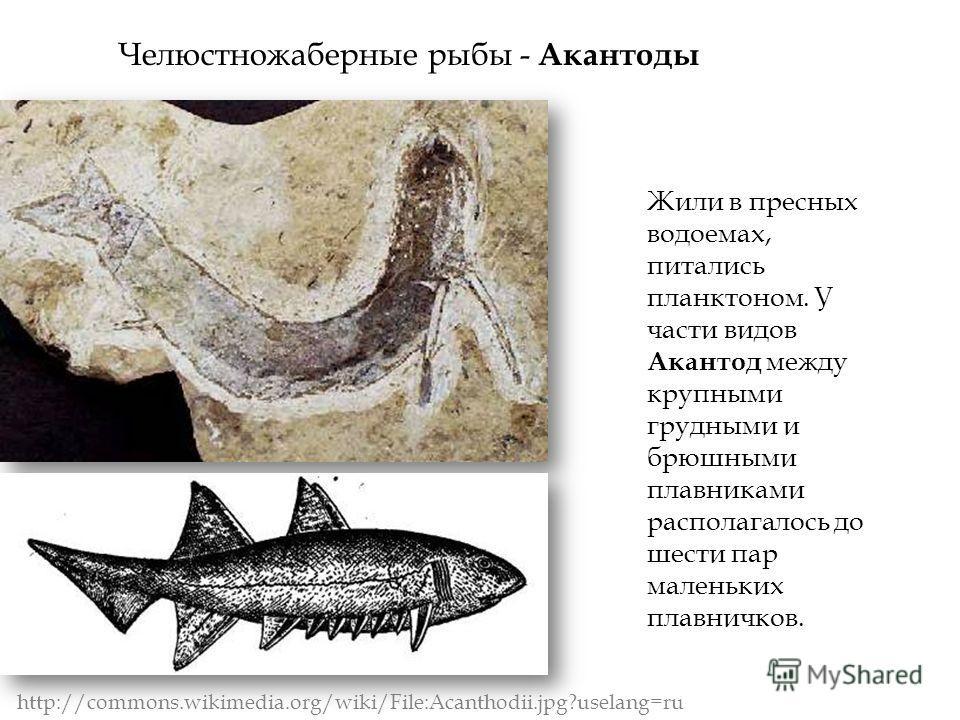 Жили в пресных водоемах, питались планктоном. У части видов Акантод между крупными грудными и брюшными плавниками располагалось до шести пар маленьких плавничков. http://commons.wikimedia.org/wiki/File:Acanthodii.jpg?uselang=ru Челюстножаберные рыбы