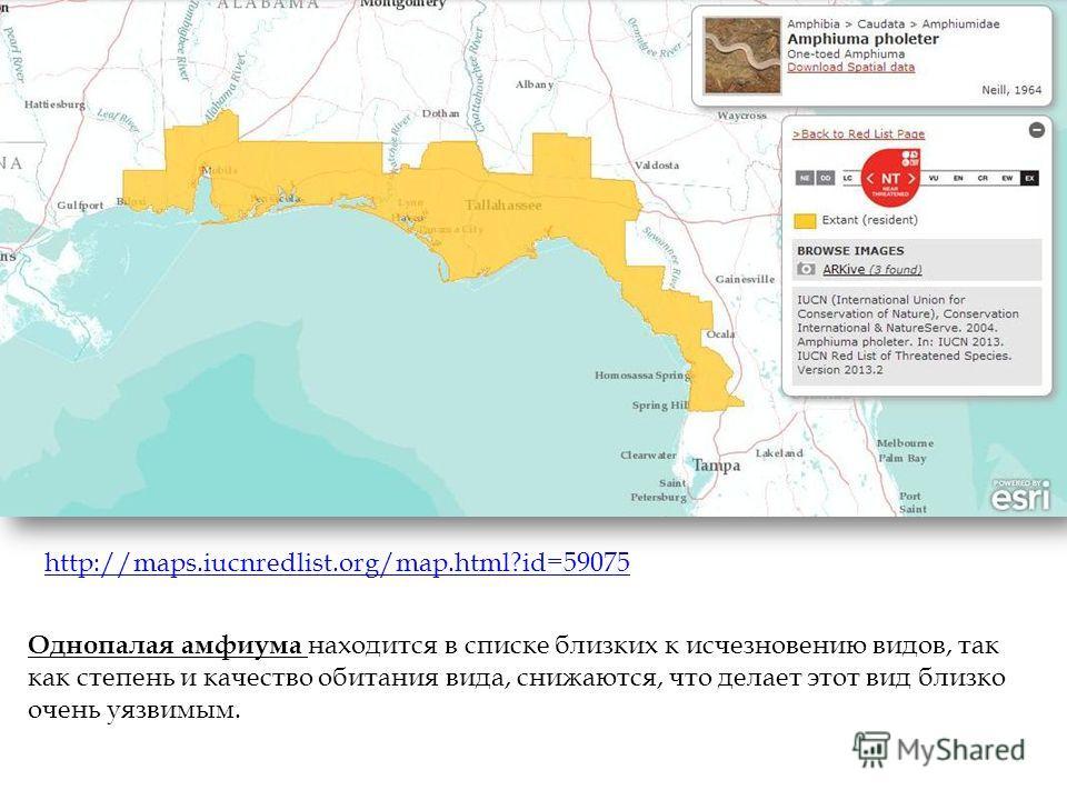 Однопалая амфиума находится в списке близких к исчезновению видов, так как степень и качество обитания вида, снижаются, что делает этот вид близко очень уязвимым. http://maps.iucnredlist.org/map.html?id=59075