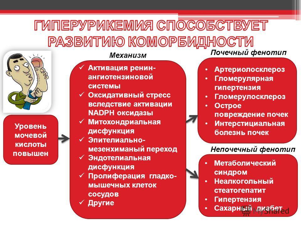 Уровень мочевой кислоты повышен Активация ренин- ангиотензиновой системы Оксидативный стресс вследствие активации NADPH оксидазы Митохондриальная дисфункция Эпителиально- мезенхиманый переход Эндотелиальная дисфункция Пролиферация гладко- мышечных кл