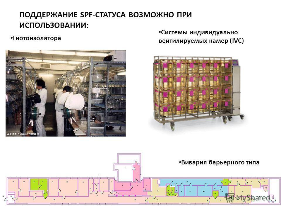 ПОДДЕРЖАНИЕ SPF-СТАТУСА ВОЗМОЖНО ПРИ ИСПОЛЬЗОВАНИИ: Гнотоизолятора Системы индивидуально вентилируемых камер (IVC) Вивария барьерного типа