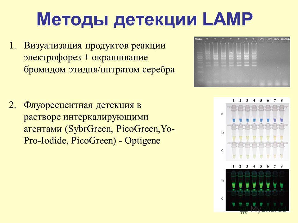 Методы детекции LAMP 1.Визуализация продуктов реакции электрофорез + окрашивание бромидом этидия/нитратом серебра 2.Флуоресцентная детекция в растворе интеркалирующими агентами (SybrGreen, PicoGreen,Yo- Pro-Iodide, PicoGreen) - Optigene