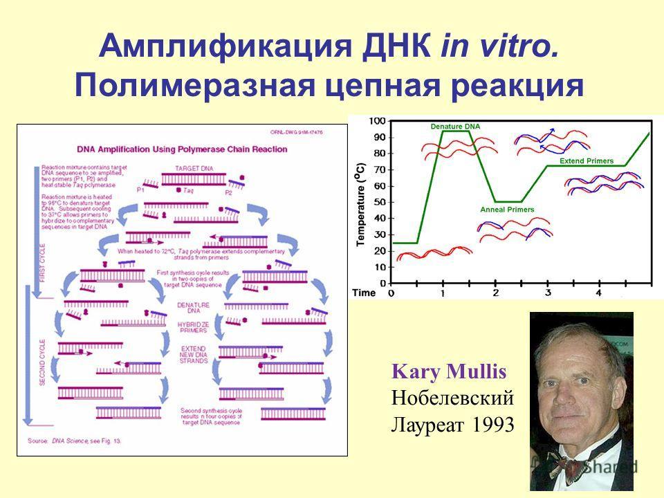 Амплификация ДНК in vitro. Полимеразная цепная реакция Kary Mullis Нобелевский Лауреат 1993