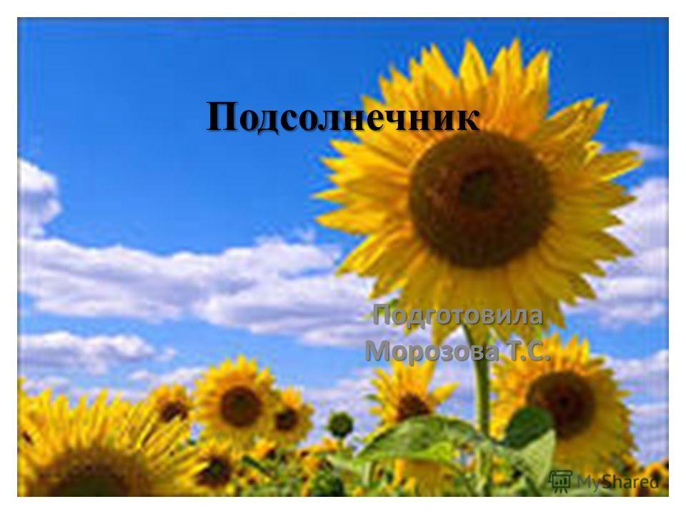 Подсолнечник Подготовила Морозова Т.С.