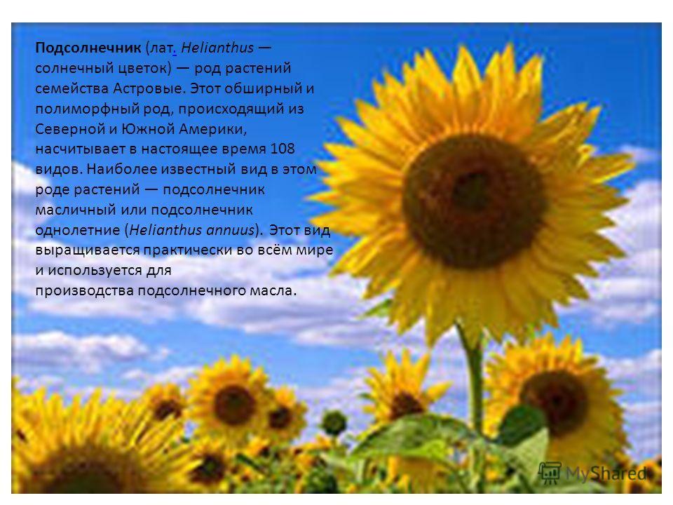 Подсолнечник (лат. Helianthus солнечный цветок) род растений семейства Астровые. Этот обширный и полиморфный род, происходящий из Северной и Южной Америки, насчитывает в настоящее время 108 видов. Наиболее известный вид в этом роде растений подсолнеч