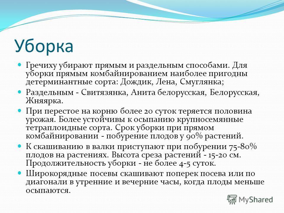 Уборка Гречиху убирают прямым и раздельным способами. Для уборки прямым комбайнированием наиболее пригодны детерминантные сорта: Дождик, Лена, Смуглянка; Раздельным - Свитязянка, Анита белорусская, Белорусская, Жняярка. При перестое на корню более 20