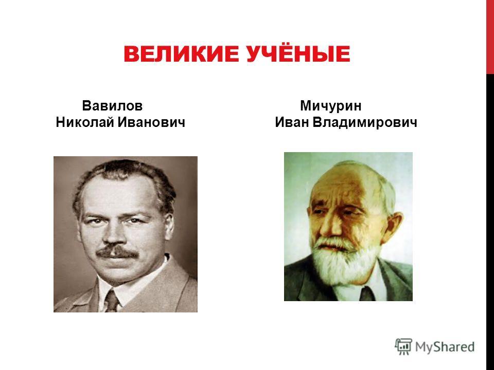 ВЕЛИКИЕ УЧЁНЫЕ Вавилов Мичурин Николай Иванович Иван Владимирович