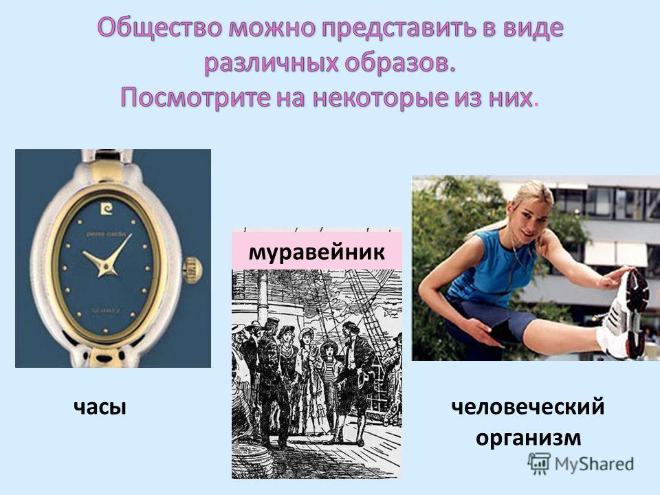 часы муравейник человеческий организм