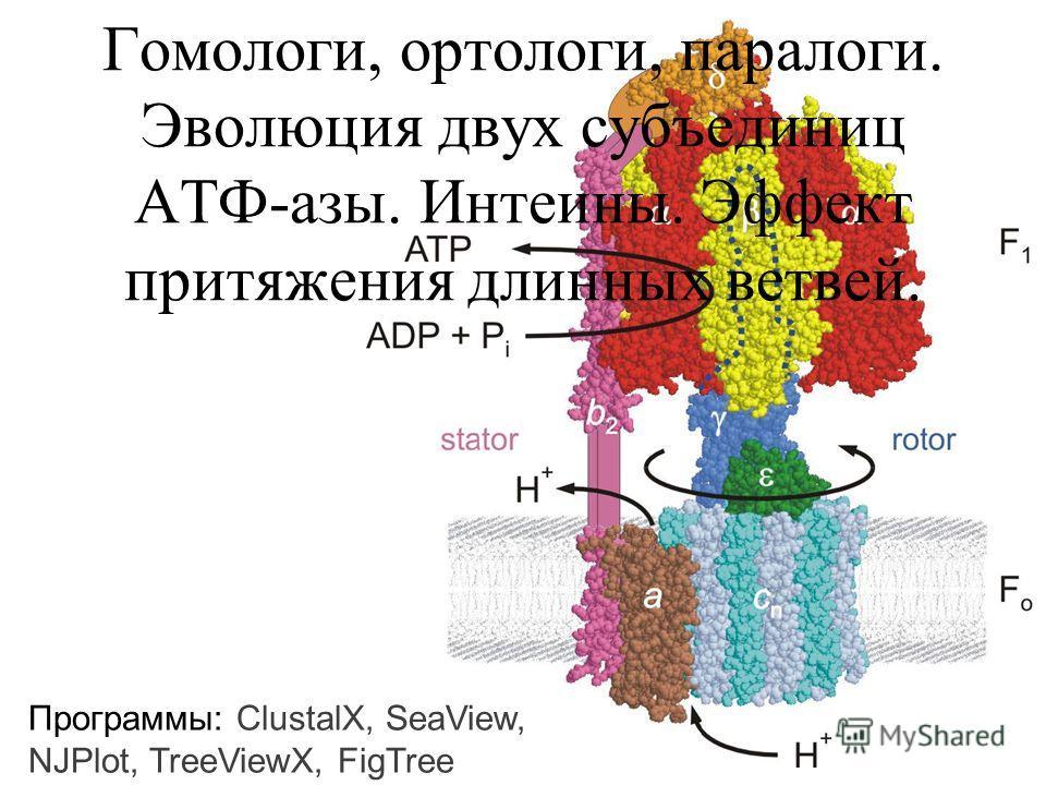 Гомологи, ортологи, паралоги. Эволюция двух субъединиц АТФ-азы. Интеины. Эффект притяжения длинных ветвей. Программы: ClustalX, SeaView, NJPlot, TreeViewX, FigTree