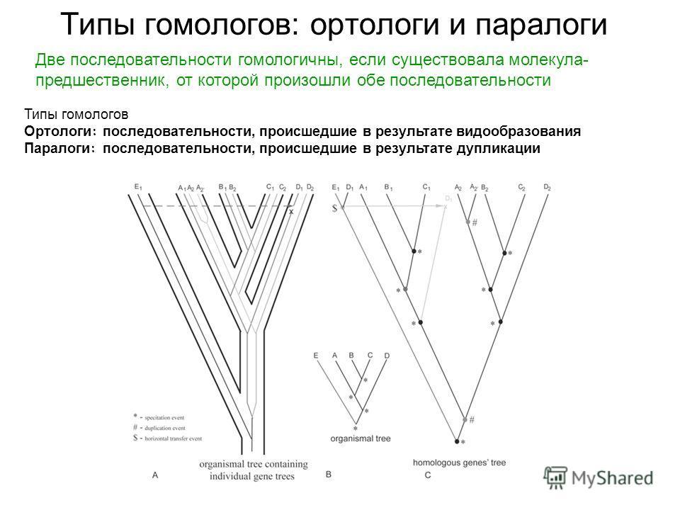 Две последовательности гомологичны, если существовала молекула- предшественник, от которой произошли обе последовательности Типы гомологов Ортологи : последовательности, происшедшие в результате видообразования Паралоги : последовательности, происшед