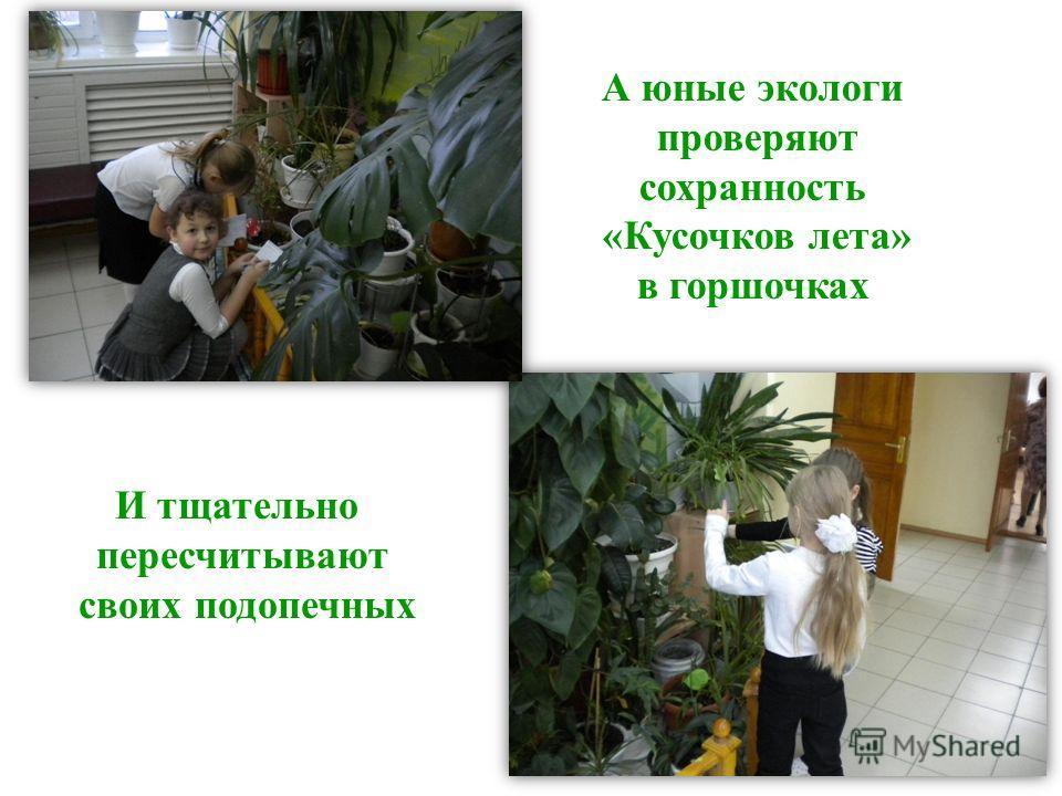 А юные экологи проверяют сохранность «Кусочков лета» в горшочках И тщательно пересчитывают своих подопечных