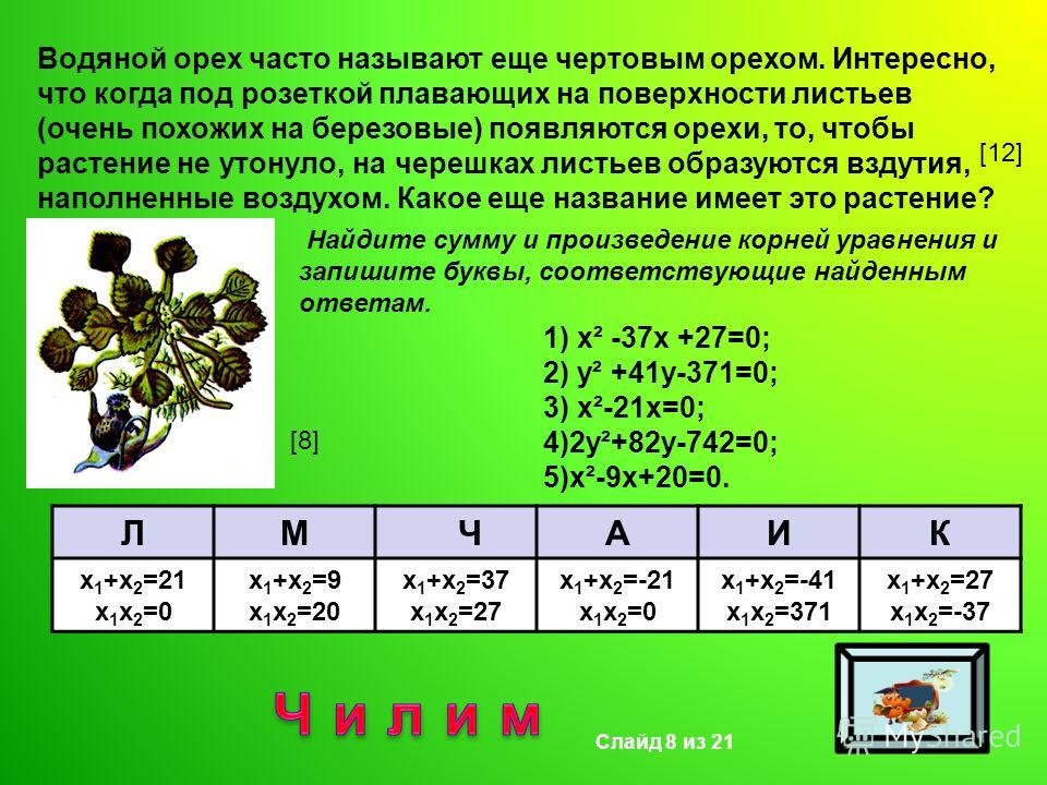 Водяной орех часто называют еще чертовым орехом. Интересно, что когда под розеткой плавающих на поверхности листьев (очень похожих на березовые) появляются орехи, то, чтобы растение не утонуло, на черешках листьев образуются вздутия, наполненные возд