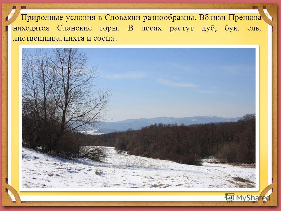 Природные условия в Словакии разнообразны. Вблизи Прешова находятся Сланские горы. В лесах растут дуб, бук, ель, лиственница, пихта и сосна.