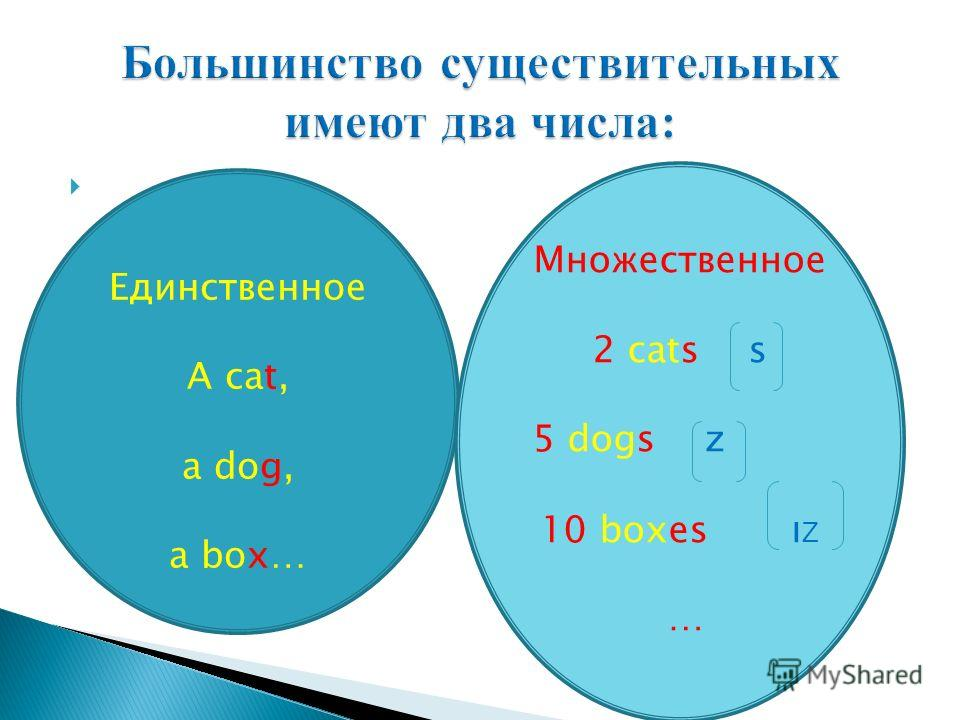 Единственное A cat, a dog, a box… Множественное 2 cats s 5 dogs z 10 boxes ı Ζ …